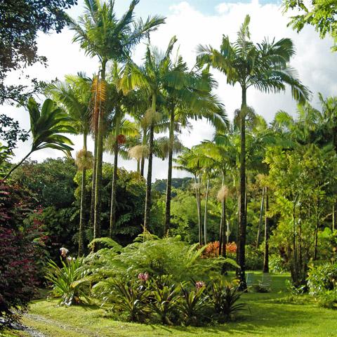 Entabeni Gardens Photos Road To Hana Maui Hawaii